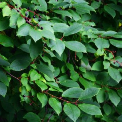 5 Resilient Trees That Will Keep Your Yard Looking Great